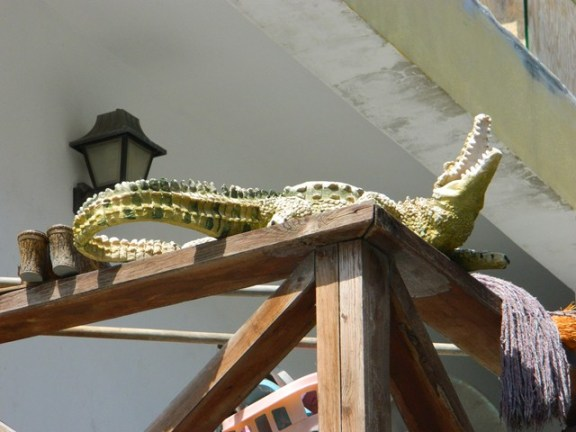 american crocodiles are belize animals
