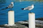 belize birds