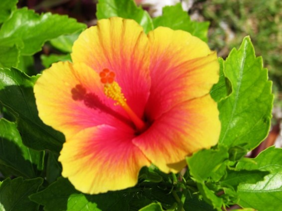 plants of belize