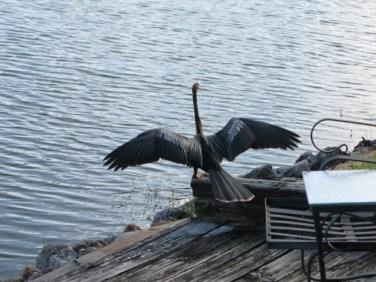 fliroda birds