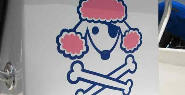 Poodle Pirate and Galen University's Timely China Business Course Offering