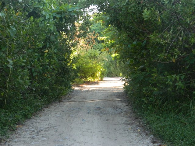 roads north ambergris caye