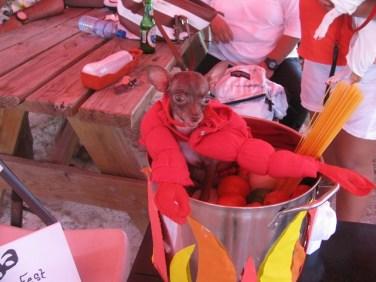 Lobster season Belize