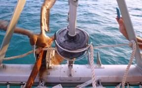 Ecologic Divers