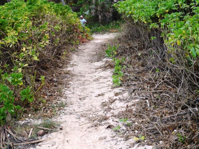 Beach path on Ambergris Caye