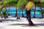 Palmtrees and Beach in Belize
