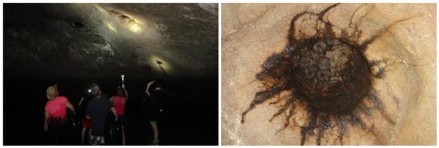 Caves Branch Belmopan Beliz