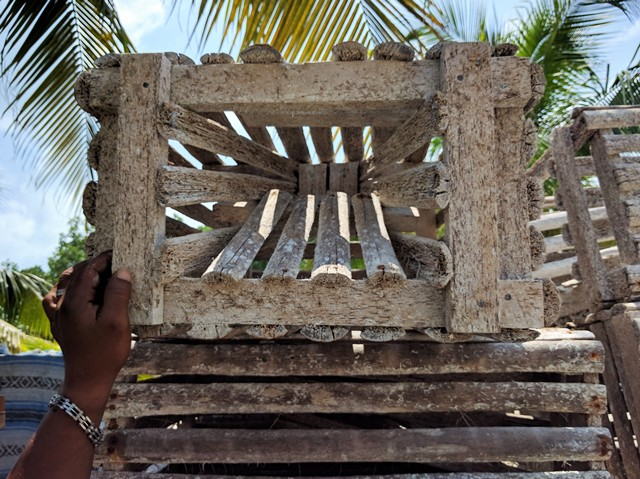 Funnel mouth lobster trap on Caye Caulker