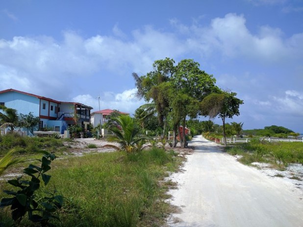 Houses on Caye Caulker Island