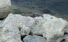 Living on Ambergris Caye Island