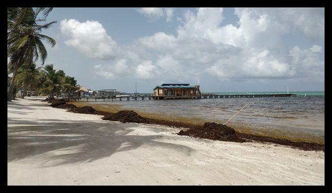 Sargasso July 2018 San Pedro Belize