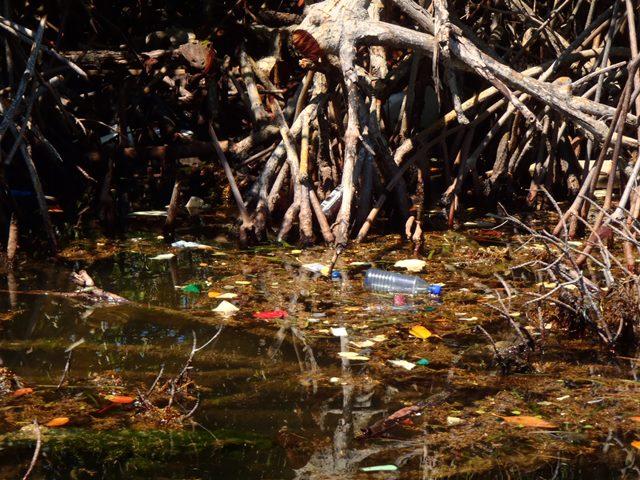 Mangrove Garbage