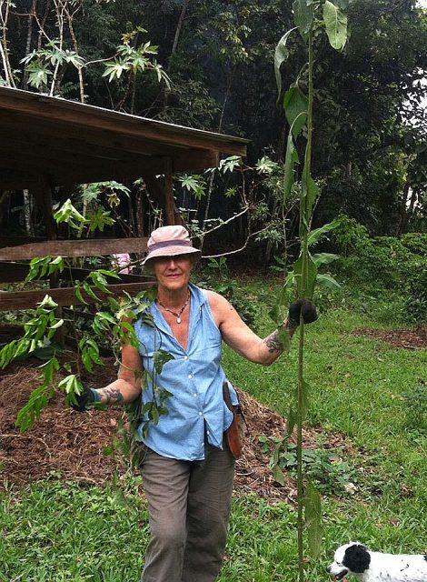 Belize Herbalist Kim Ringland