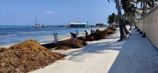 Sargasso San Pedro Belize Beach