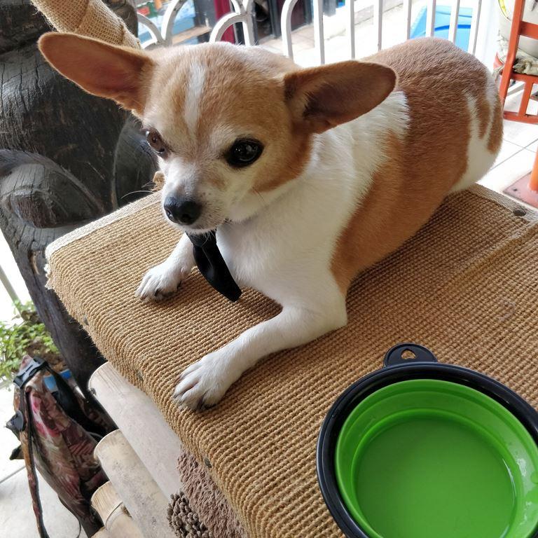 cute small dog saga humane society fundraiser