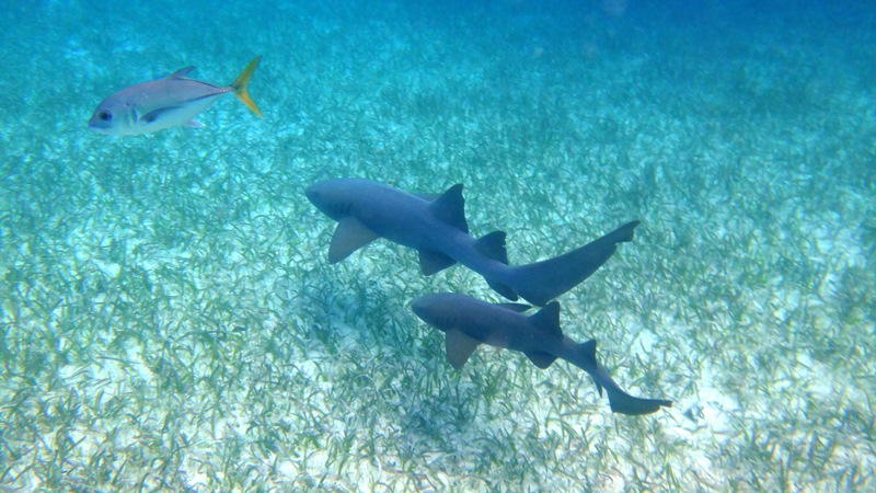 hol chan marine reserve Belize