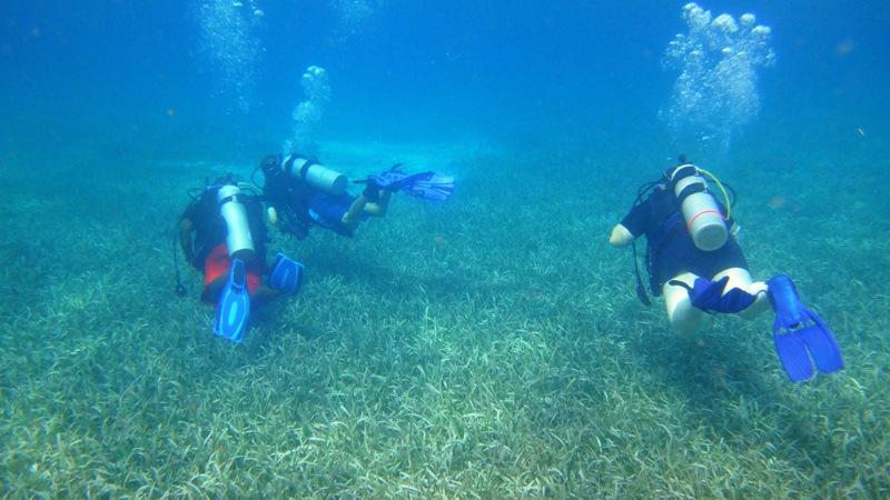 diving hol chan marine reserve