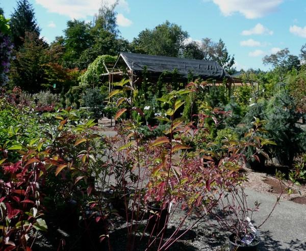 fall nursery vassey
