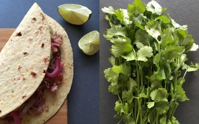 Tacos med carnitas