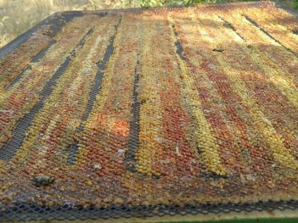 plasa colectat propolis
