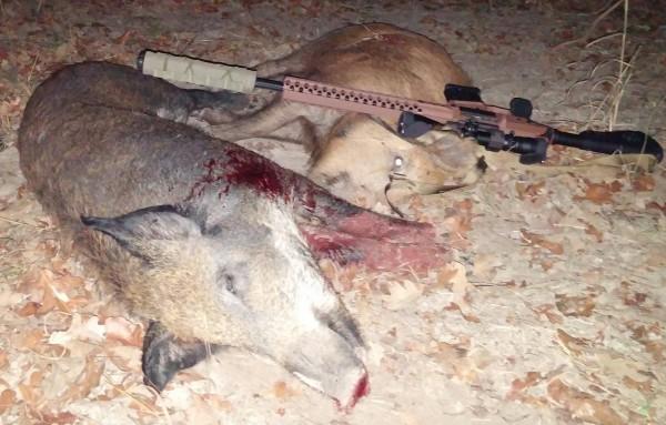 Wilson Combat 308 drops two hogs