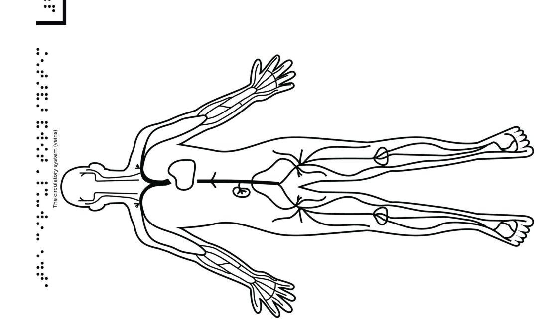 the circulatory system veins