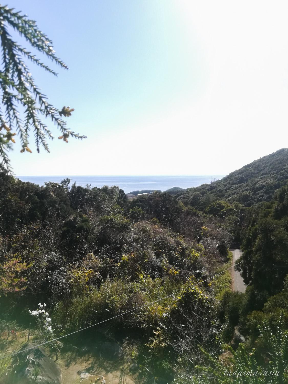 木の上からの景色