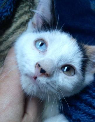 Special Needs Cat Saltwater Taffy Has a Home!