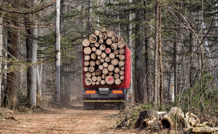 Генпрокуратура отчиталась в области природоохранной деятельности