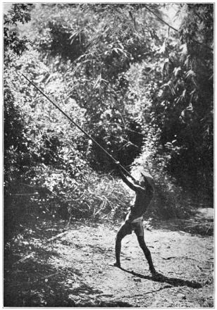 Photo of Itneg or Tinguian hunter using a blowgun