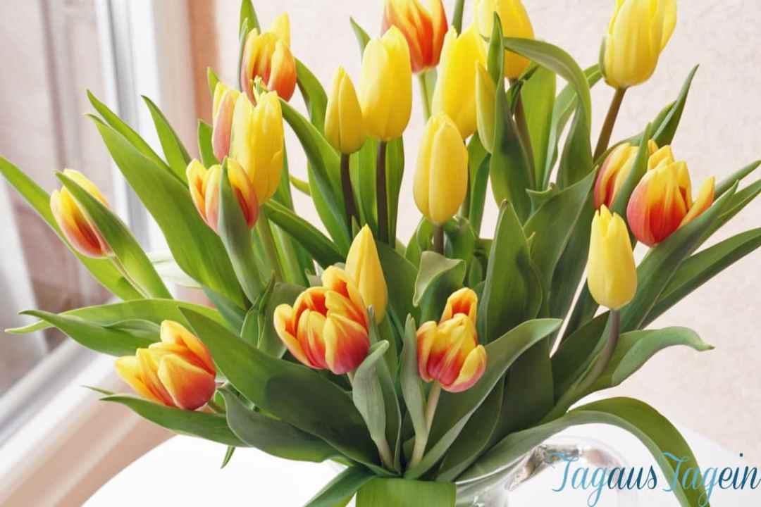 Wochenende-in-Bildern-gelbe-Tulpen