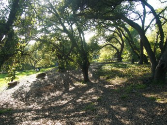 John Hinkel Park Picnic Area