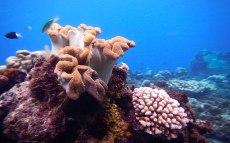 Snorkeling in Tanjung Angus Beach, Island of Ruang. Tagulandang, Sitaro.