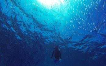Snorkeling with thousands of little schooling fish