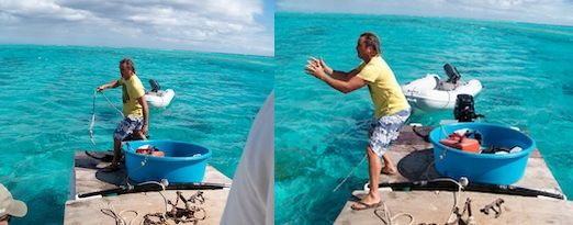 Coconut is returned by a local boater