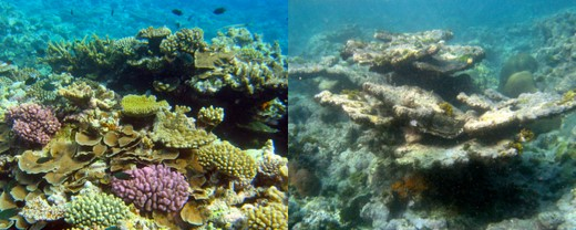 Live verses dying underwater coral reefs
