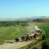 Tahir Özgür The Last Nomads-0108