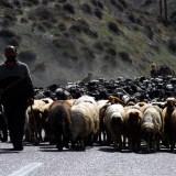Tahir Özgür The Last Nomads-0110