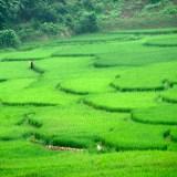 Tahir Özgür Vietnam-Cambodia-102