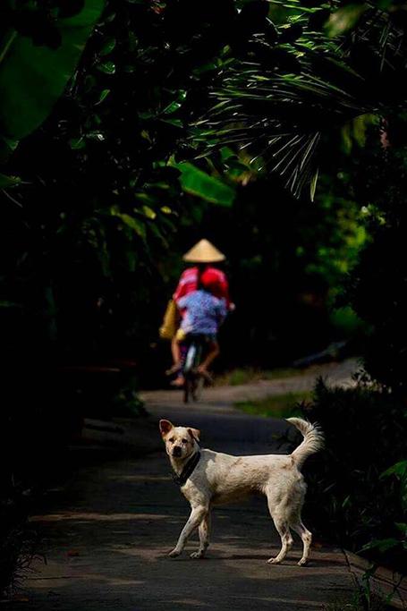 Tahir Özgür Vietnam-Cambodia-116