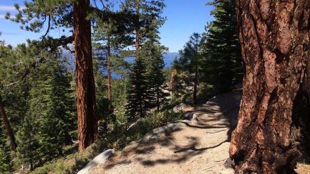 Nice Shady Trail Ahead