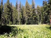 Meadow near Velma