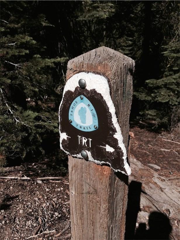Deer chew stick near Vista Point, Brockway East