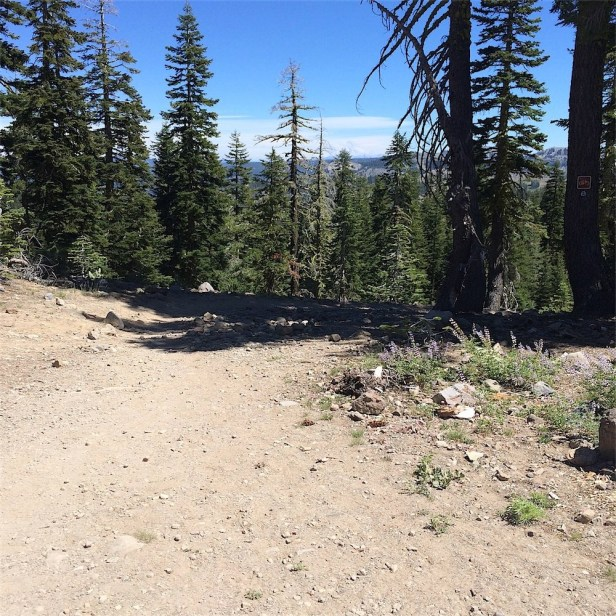 Road rejoins PCT near Castle Pass