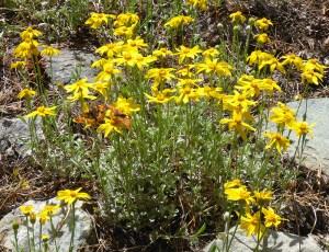 10-Monarch Butterflies on Wildflowers