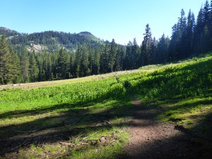 14-Morning Meadow South of Barker Pass