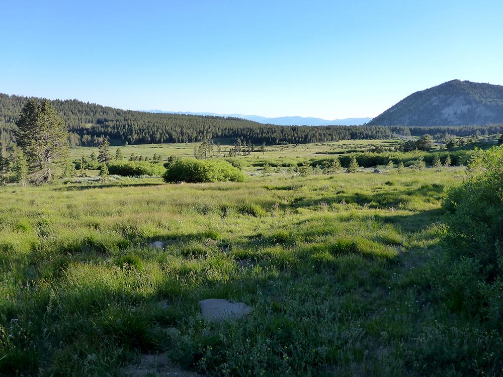 39-Tahoe Meadows