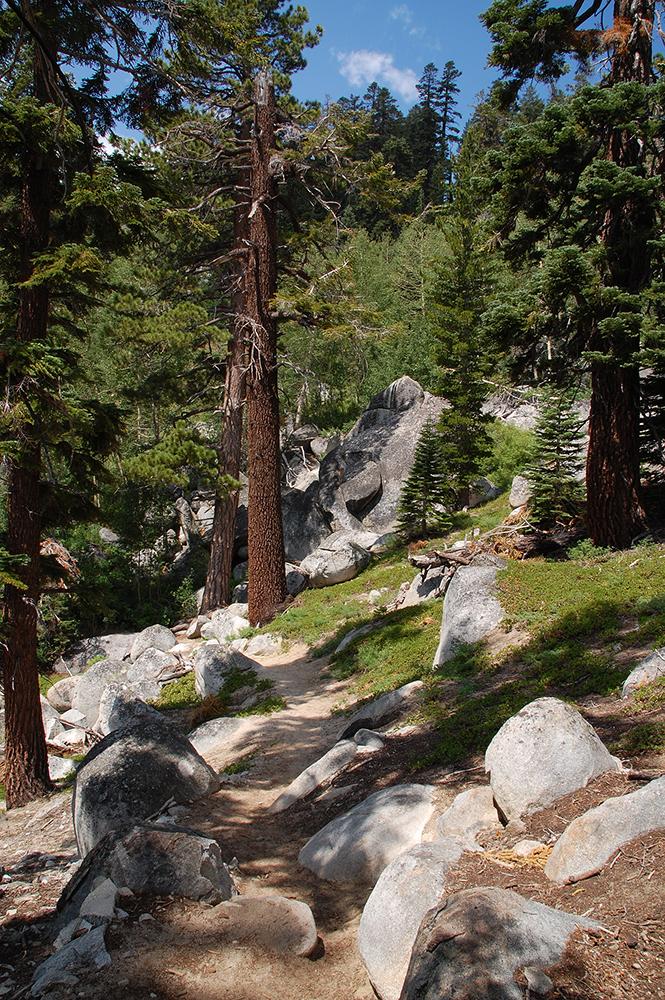 63-Granite and Jeffrey Pines