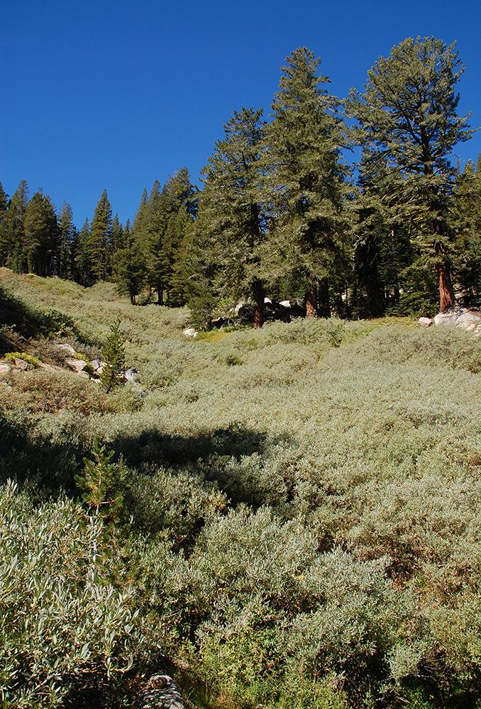 77-Tahoe Rim Trail