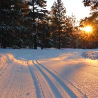 Buying Cross-Country Ski Gear, for Beginners (Part 1)